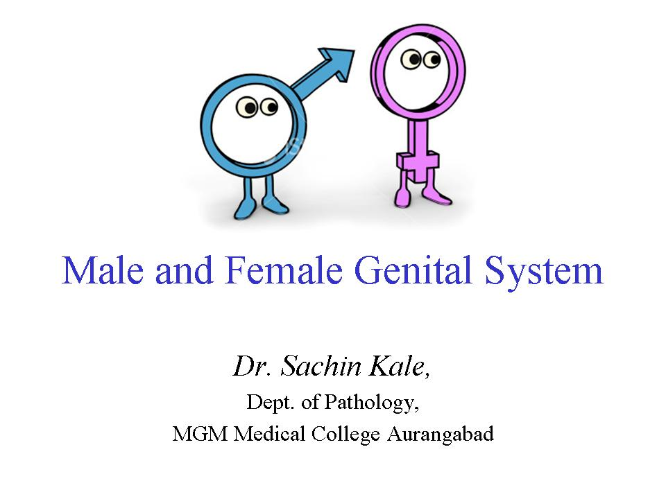Male and Female Genital system